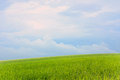 Field of grass and perfect sky green blue Royalty Free Stock Photos