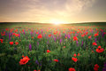 Field with grass, violet flowers and red poppies. Royalty Free Stock Photo