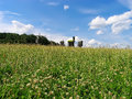 Field of grass and windmills Royalty Free Stock Photography