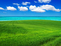 Field green and blue sky Royalty Free Stock Photos