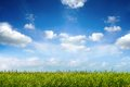 Field of green fresh grass under blue sky Royalty Free Stock Photo
