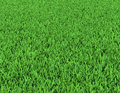 Field of green grass background texture high resolution Royalty Free Stock Photos