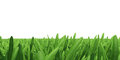 Field of green grass background texture high resolution Stock Images