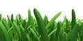 Field of green grass background texture high resolution Royalty Free Stock Photo
