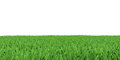 Field of green grass background texture high resolution Stock Photos
