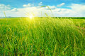field, green grass, blue cloudy sky and sunrise Royalty Free Stock Photo