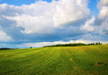 Field of green grass and blue sky Royalty Free Stock Photo