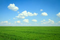 Field with green grass and clouds on blue sky Stock Photos