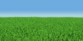 Field of green grass d render on blue sky background Royalty Free Stock Images