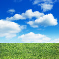 Field of green grass and sky blue Stock Image