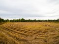 The field after the harvest. Royalty Free Stock Photo