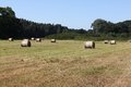 Field with hay bales Stock Photo
