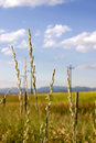 Field in Helena with Focus on the Weeds (DOF) Royalty Free Stock Image