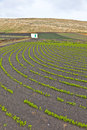Field with irrigation system on volcanic ground Stock Photo