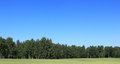 Field landscape bordering the forest with on blue sky background Royalty Free Stock Images
