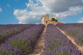 Field of lavender with house ruins in provence france Royalty Free Stock Photos