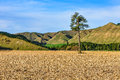 Field with lonely tree in whanganui national park new zealand a the north island of Stock Photo