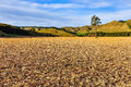 Field with lonely tree in whanganui national park new zealand a the north island of Royalty Free Stock Photography