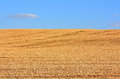 The field of mown wheat on blue sky background Stock Photos
