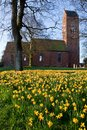 Field of narcissus flowers with church Royalty Free Stock Photos