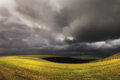 Field near the coast before the storm. Royalty Free Stock Photo