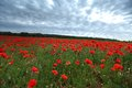 Field of poppies with beauty sky Royalty Free Stock Images