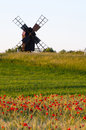 Field of poppies in front of an old windmill at the swedish island oland Royalty Free Stock Photography