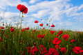 Field of poppy and blue sky Royalty Free Stock Image