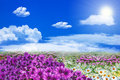 Field of purple white daisy flowers and coluds on the clear blue sky Stock Image