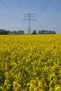 Field with rape and electricity mast Royalty Free Stock Photos
