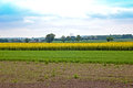 Field of rape which is produced rapeseed oil Royalty Free Stock Photography