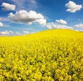Field rapeseed beautiful cloud plant green energy Stock Photos