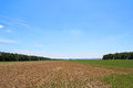 Field rests in summer. Fallow land Royalty Free Stock Photo