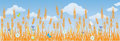 Field of ripe wheat ears Royalty Free Stock Photo