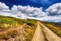 Field road in the mountains under the blue sky. Dramatic scene. Royalty Free Stock Photo