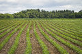Field Rows Royalty Free Stock Photos