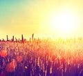 Field. Rural Landscape