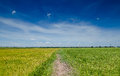 Field sideway in the clear sky Royalty Free Stock Images