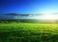 Field of spring grass in sunset time Royalty Free Stock Photo