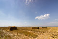 Field of straw bales. Bale of straw in a yellow landscape. Straw field blue sky. Square straw Bale. Royalty Free Stock Photo