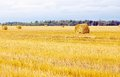 Field with straw sheaves after a crop harvest Royalty Free Stock Photo