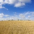Field, stubble field. Royalty Free Stock Photos