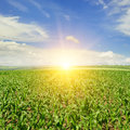 field and sunrise on blue sky Royalty Free Stock Photo