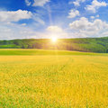 Field, sunrise and blue sky Royalty Free Stock Photo