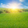 field and sunrise in the blue sky Royalty Free Stock Photo