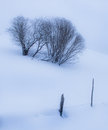 Field with trees in winter landscape a and a fence Stock Images