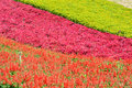 Field with various flower in colors pattern shown as spring and growing season Royalty Free Stock Photo