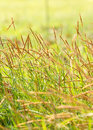 Field of weed grass in the sunny day Stock Photography