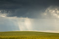 Field of wheat and stormy clouds Royalty Free Stock Photo