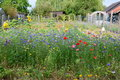Field Of Wild Flowers With Lot...